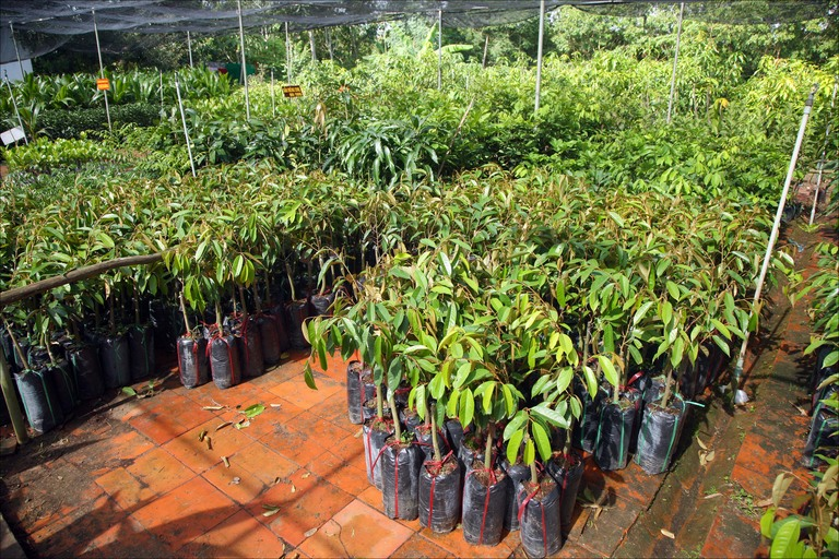 Diploma Horticultural Nursery Management (DHNM)