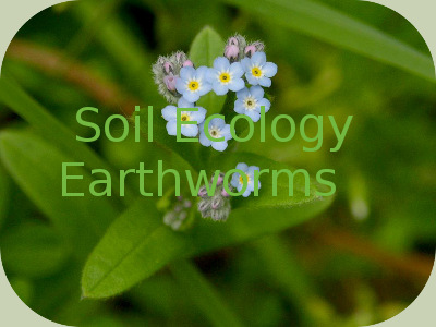 Certification Soil Ecology, Earthworms (CSEE)