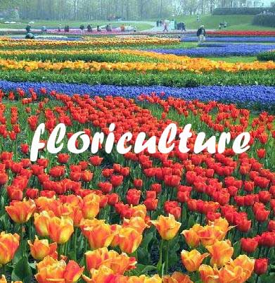 Diploma Commercial Floriculture (DCF)