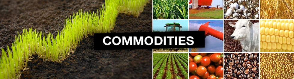 Diploma in Commodities Market (DICM)