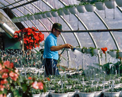 Certificate Courses in Garden Horticulture and Maintenance