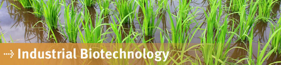 Bachelor of Technology (BTech Industrial BioTechnology)