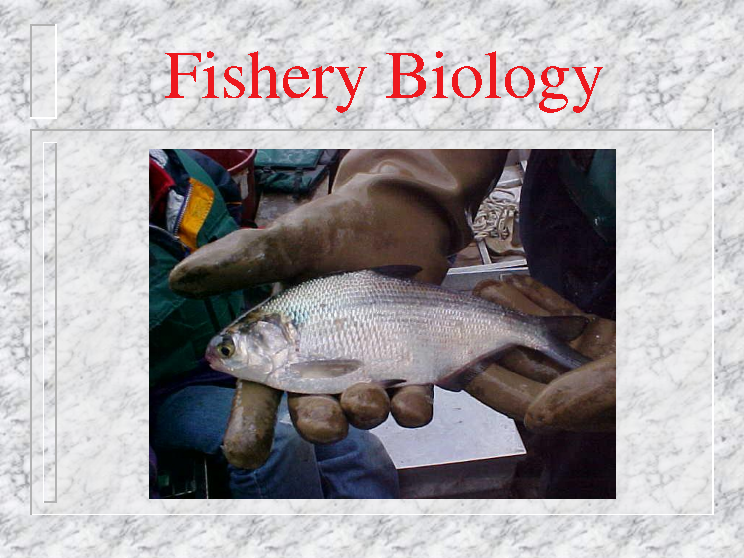 Master of Fisheries Science (MFSc Fishery Biology)