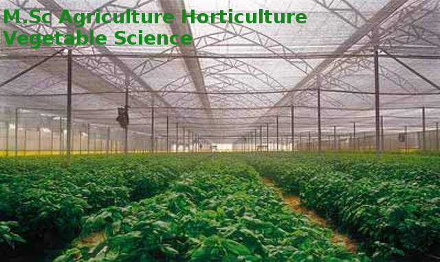M.Sc Agriculture Horticulture Vegetable Science640 x 382 jpeg 78kB