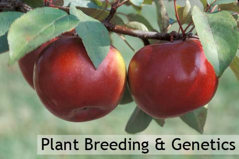 Doctor of Philosophy (PhD Plant Breeding & Genetics)