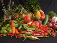Diploma in Vegetable Production
