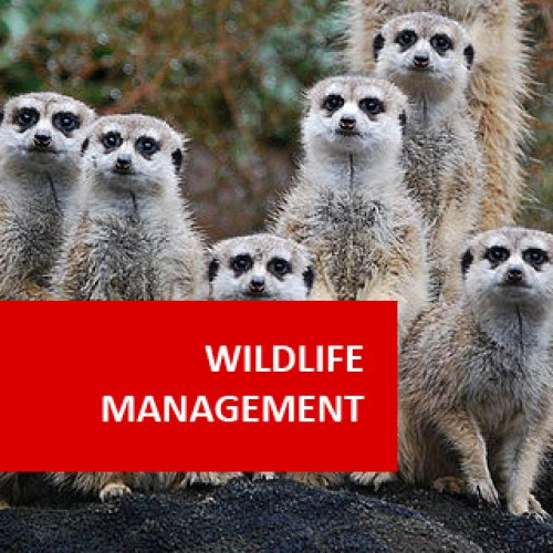 Post Graduate Diploma in Wildlife Management
