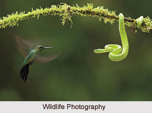 Certificate Course in Wildlife & Wildlife Photography