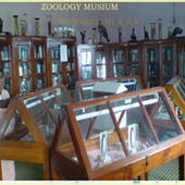 College Zoology Lab - College Zoology Lab