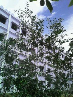 Building View through Trees - PSN College Of Engineering And Technology PSNCET, Tirunelveli