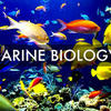 Doctor of Philosophy (PhD Marine Biology)