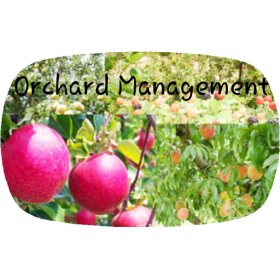 Certificate Course in Orchard Management