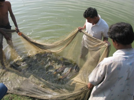 College of Fishery Science, Nagpur
